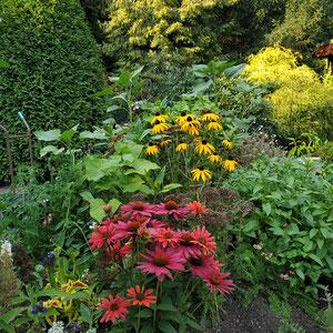 Stauden auf Hochbeet: Sonnenhüte (Echinacea), Pfefferminze, Schafgabe und Sonnenblumen.
