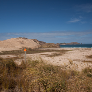 alle Bilder von https://www.backpackerguide.nz/6-incredible-things-to-do-at-cape-reinga/