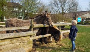 Ponys und Esel auf dem Almthof