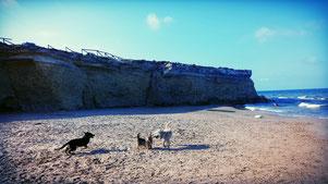 Sizilien mit Wohnmobil und Hund - Südküste - Traveldog - fair4world