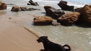 Sizilien mit Wohnmobil und Hund - Westküste - Traveldog - fair4world