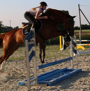 Beckys erster Wassergraben...gar nicht schlecht für ein Dressurpferd
