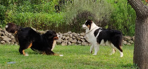 pension canine les pattes libres Montpellier