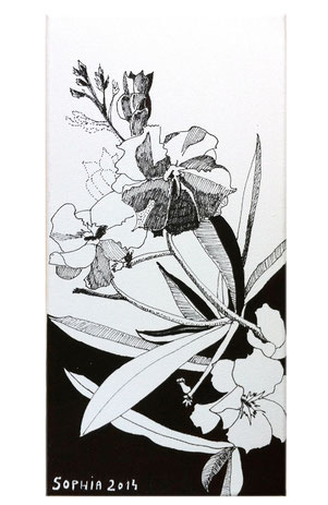 Wie ein Bild entsteht. Oleander. Mont Blanc.