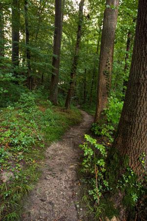Kleine Wanderpfade ziehen sich durch den Wald.