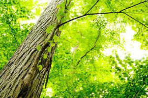 爽やかな森林浴