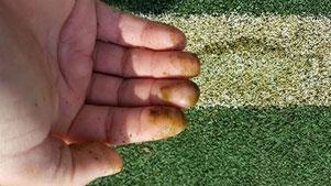 Auch auf Kunstrasen sammeln sich Staub, Blütenstaub und Bioschmutz - und der verfault. Alga Velan kriegt solche Kunstrasenfelder wieder rein