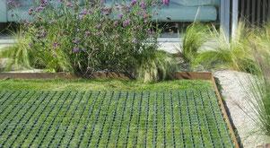 Rasenschutzgitter für permanenten oder temporären Schutz von Grünflächen