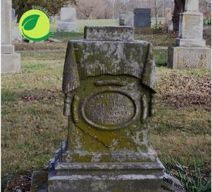 Milchsäurebakterien übernehmen die Reinigung von Denkmälern