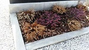 Gradsteine und Umrandungen werden mit der Kraft von Mikroorganismen porentief gereinigt und wieder wie neu
