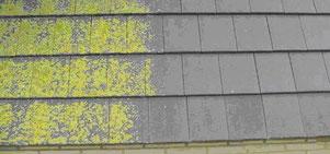 Schimmel am Dach, Dachstein schimmlig, Dachstein reinigen, Reinigung, Moos Beseitigung, Moosentfernung, Algenbefall, grünes Dach,