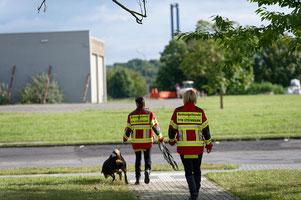 Die Rettungshundestaffel der Freiwilligen Feuerwehr Steinmark bei einer Einsatzübung. Hundeführerin Annabell Bauer mit dem Labradoodle Marlon.