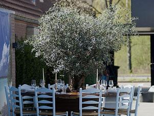 Olivenbaum auf der Terrasse in der gastronomie