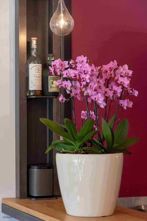 arrosage orchidée connecté avec OriCine® en situation dans un bar 3