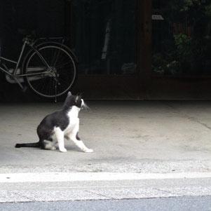 猫たちはずっとこんな生活テンポだろうな