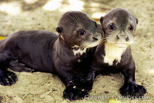 Autor: Nicole Duplaix / SeaPics.com