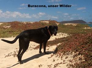 Buracona, der Überschwängliche