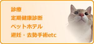 猫の診療・健康診断・ペットホテル・手術