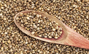 semillas de cañamo españa, semillas de cannabis en españa