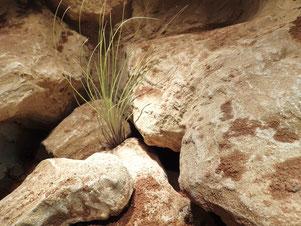 Rückwand im Wüstenterrarium *grob besandet*