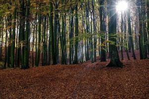 Wald, umarmen, Bäume