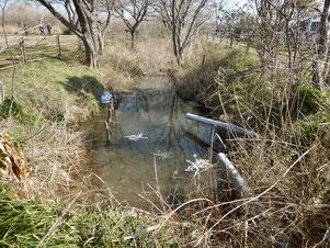 水位が戻った水路(3月2日)