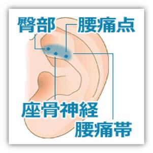 腰痛帯エリアは親指の横幅とほぼ同じです