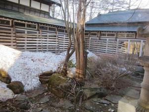 こちらは今日の小林家のお庭です。だいぶ雪がとけました!