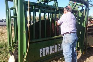 牛用のシュート(注射等を打つときに牛を抑えるために使用する)