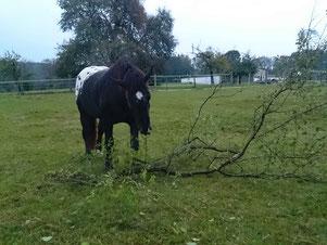 Ein Knabberast auf der Weide