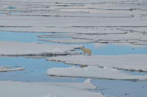 Der Eisbär – Symboltier des Klimawandels, Foto: Birgit Lutz