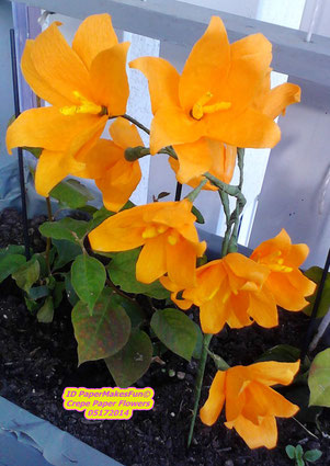 Crepe Paper Blossoms - orange
