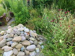 Steine + Blüten = Wärme + Nahrung für Insekten, Foto: K.Herczog