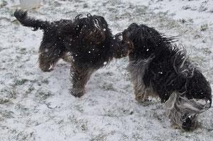 Calle und Frieda : rendevous im Schnee