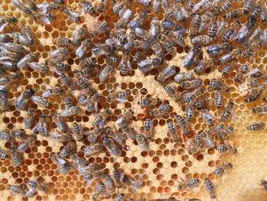 Honig-Herstellung