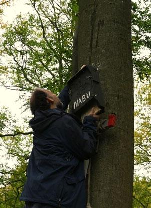 Ehrenamtliche des NABU Kiel hängen Fledermauskästen auf - Foto: Frank Pliquett