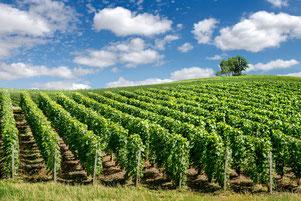 """La région """"Champagne"""" commence à quelques kilomètres de chez nous."""