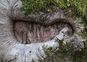 Naturfotografie im Marburger Wald am Spiegelslustturm
