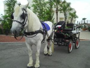 ゲストのベンチは向かい合っているスタイルです。白い馬車よりもひとまわり小さいです。詳細は、馬車のページに記してあります。