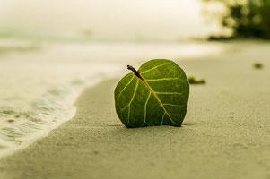 Foto von einem Blatt am Strand.