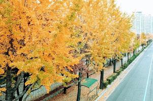 秋を楽しむ身体も鍼灸で