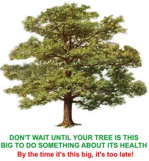 Boston Tree Services