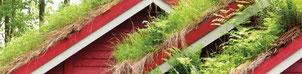 Klimaschutz, Erwärmung, CO2 Binden, Häuser kühlen, Dächer beschichten, Dächer begrünen