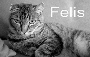 Redaktionskatze Felis © FFM PHOTO