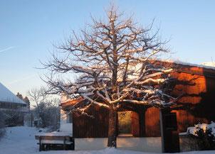 24. Januar 2016 - Wärmeeinbruch - Es soll bald vorbei sein, mit der weissen Pracht