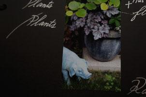 plants rainy story 2010