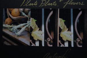 plants autum story 2010