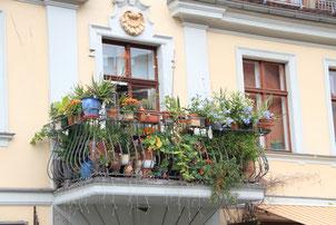 Begrünter Altbau-Balkon