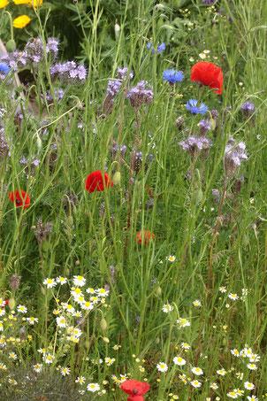 Ein Stück naturnaher Garten (G. Franke, 29.05.2019)
