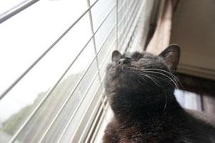 黒猫ののこ